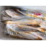 野生黄花鱼