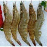 大明虾基尾虾